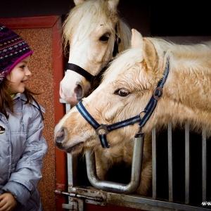 Dziewczynka przy koniach