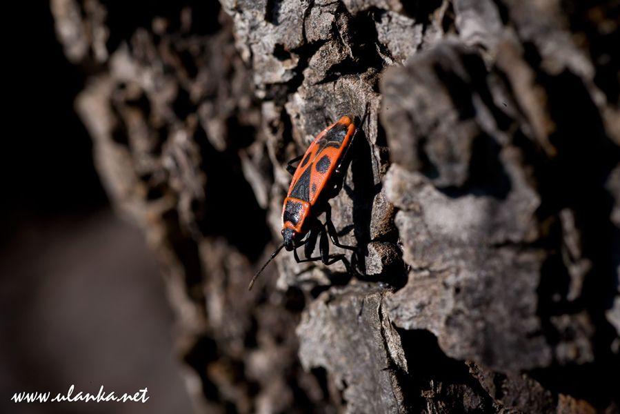 makrofotografia - owady